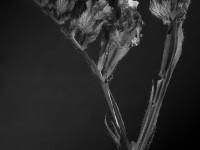 flower-965