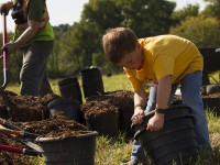 Planting Oaks in Sleepy Hollow, IL