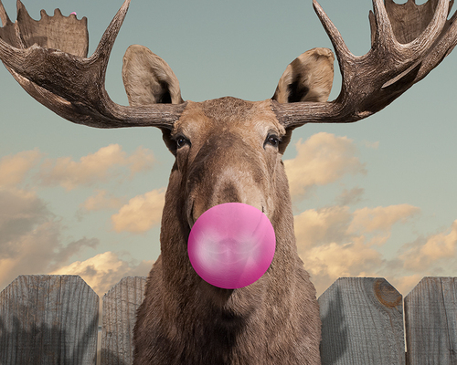 Bubblegum Bubble